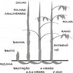 Imagem 3 - Estrutura do Bambu